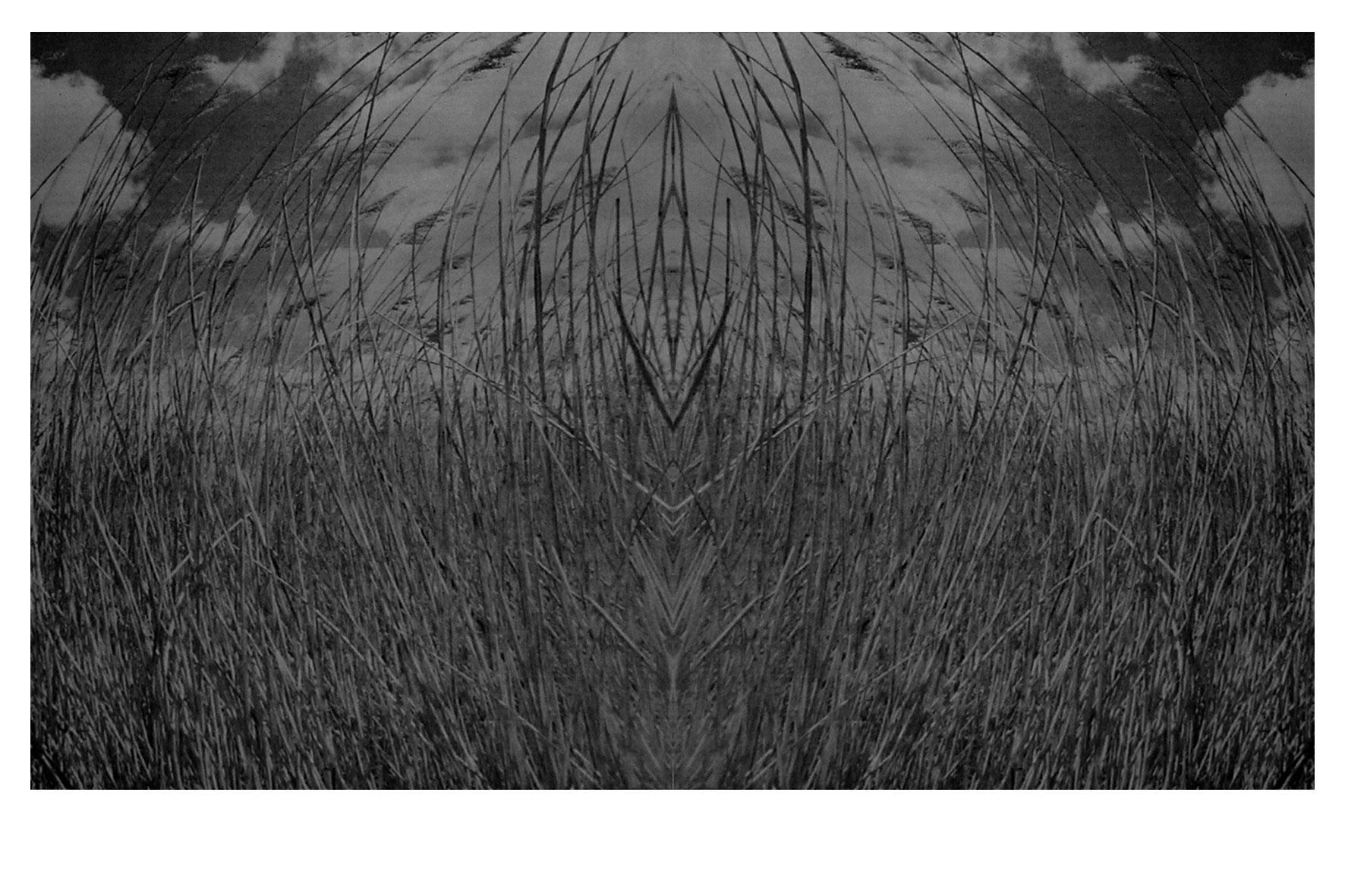 Trigo, paisaje, serigrafía, 48 x 80 cm, 1999.