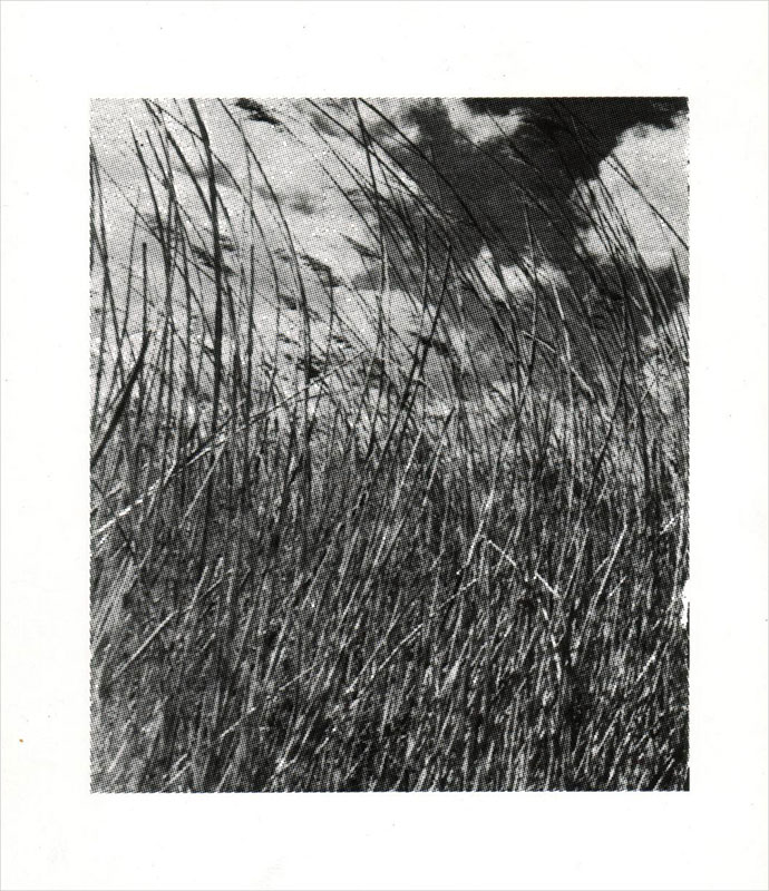 Trigo, paisaje, serigrafía, 48 x 40 cm, 1999.